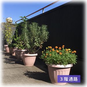 吉祥寺本町法律事務所 エクステリアイメージ:開放感のある最上階、観葉植物のある通路