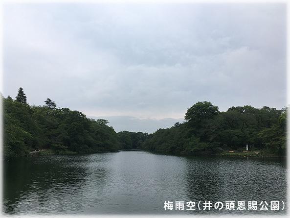 吉祥寺本町法律事務所 季節の写真